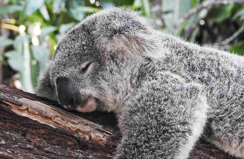 オナ禁で睡眠時間が減りショートスリーパーになるのか?