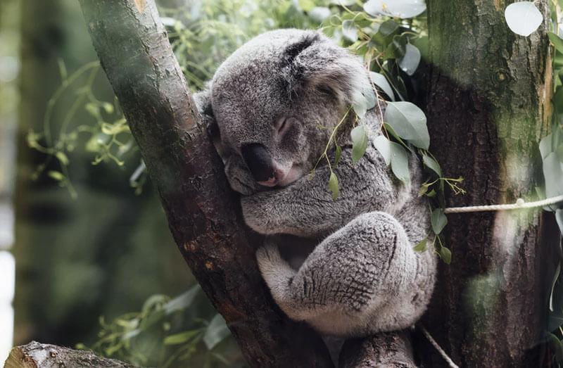 オナ禁をすると睡眠時間が減りショートスリーパー化するのは本当か?